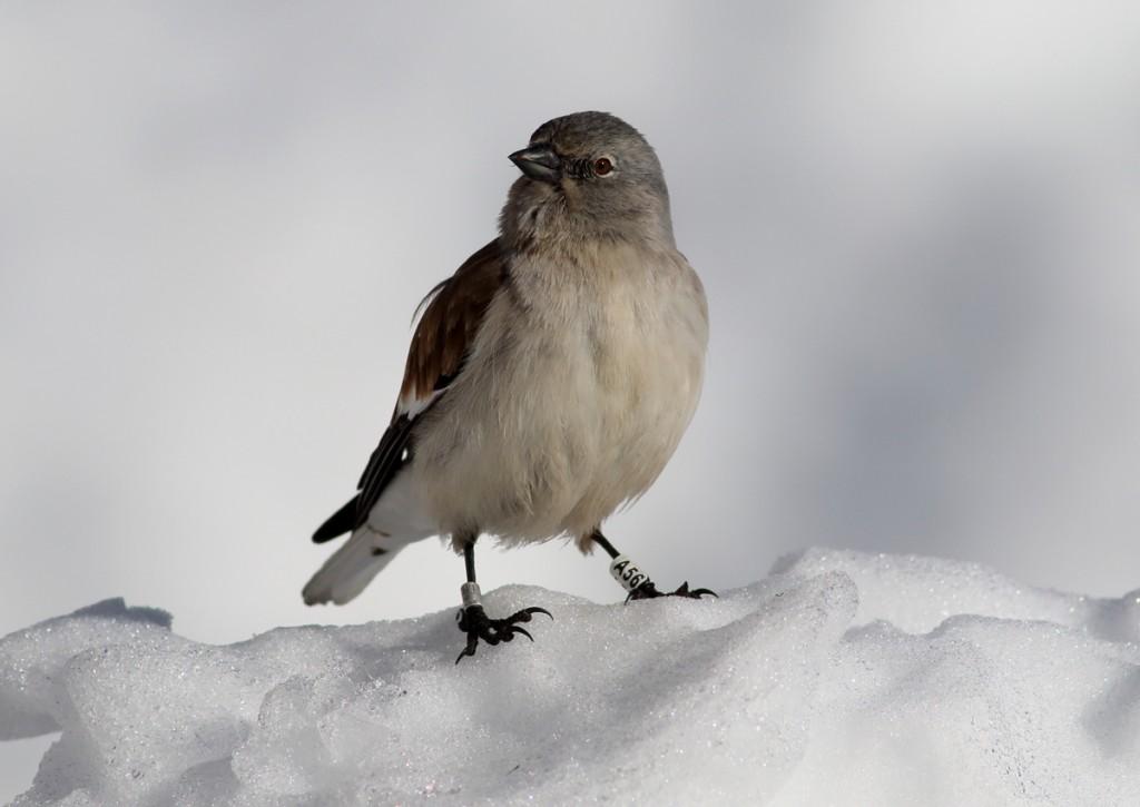© gallery web snowfinch.eu
